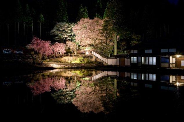 【桜・見ごろ】宮谷の桜