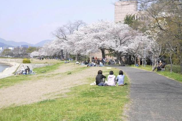 【桜・見ごろ】基町河岸公園