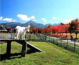 【紅葉・見ごろ】八ケ岳中央農業実践大学校