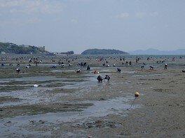 遠浅の浜辺なので子供と一緒に楽しめる