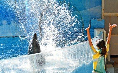 Cool!Dolphin!〜kizuna de summer〜
