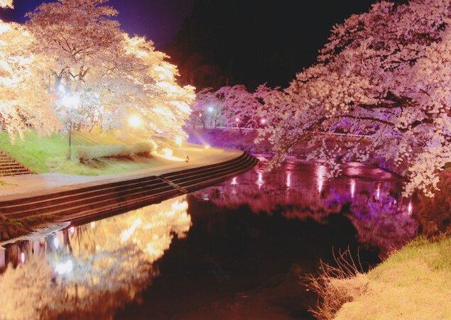 あさひ公園の桜ライトアップ