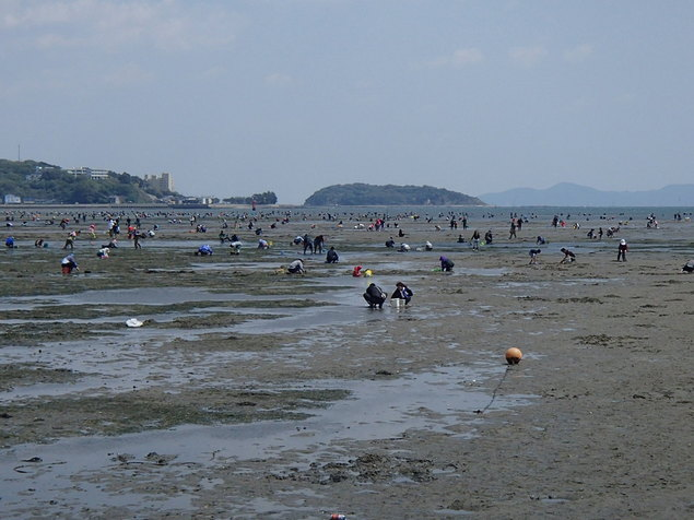 吉田海岸 潮干狩り