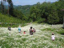 第30回いけだまちひろつカミツレ花祭り