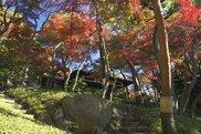 殿ヶ谷戸庭園 秋の催し