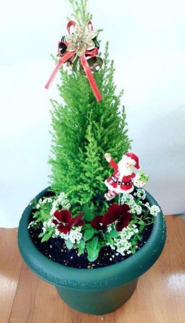 瀬尾造園presents 12月のflower &ミニtrees販売会