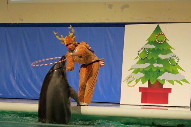イルカパフォーマンスクリスマスバージョン
