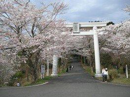 愛宕山(山頂)の桜