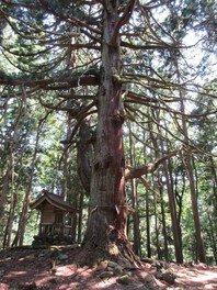 平泉寺七本杉をめぐる