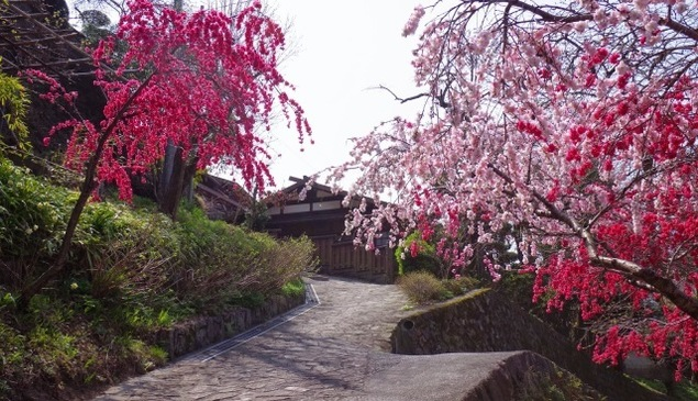 早川ぶらり町あるき 桜咲く江戸の宿場町・赤沢