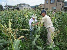 内鎌もろこし村収穫祭