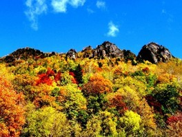 【紅葉・見ごろ】大雪山国立公園