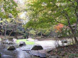 【紅葉・見ごろ】磯川緑地公園