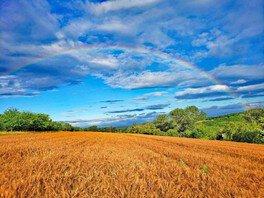 有機小麦で作ろう!麦ストローワークショップ