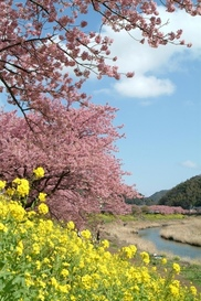 第21回 みなみの桜と菜の花まつり