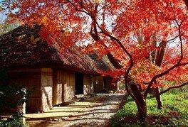 【紅葉・見ごろ】四国村