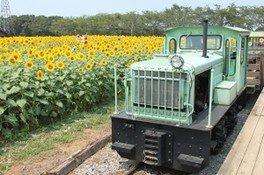 ひまわり列車2020