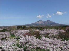 展望エリアから望むことができる駒ヶ岳と園内の桜の様子