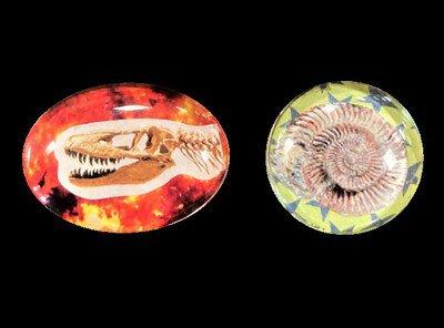 特別展関連ワークショップ「ぷっくり化石柄マグネット」