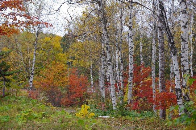 日和田高原の紅葉