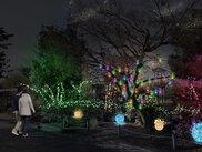 京都・冬の光宴2019 Starlight Avenue~人と光が作りだす街の架け橋~