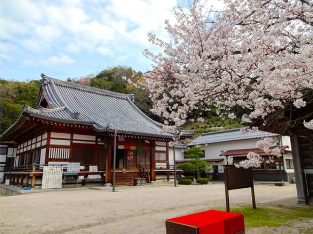 【桜・見ごろ】大平山金毘羅院