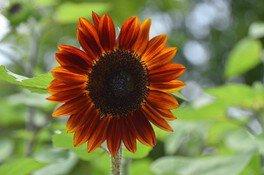 夏の花を調べよう!~自分で作る花図鑑~<中止となりました>