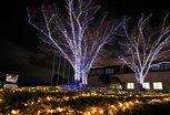 徳島文理大学イルミネーション(香川キャンパス)