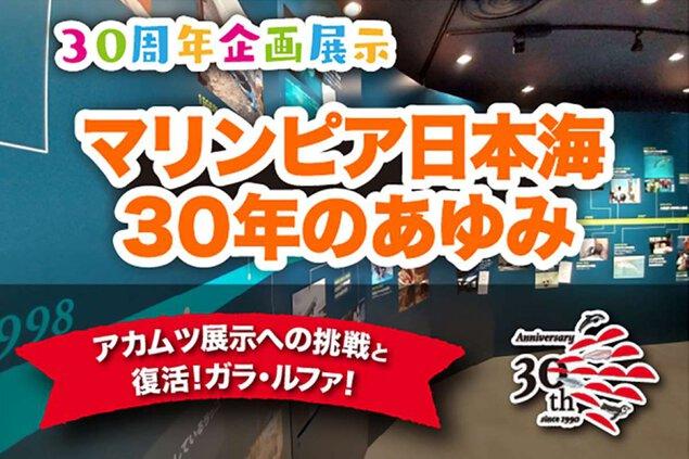 30周年 企画展示「マリンピア日本海30年のあゆみ」 第 4 期「アカムツ展示への挑戦と復活!ガラ・ルファ! 」