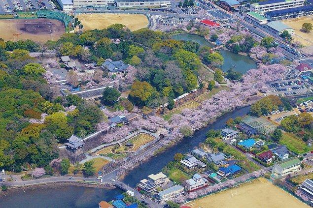 大村公園(大村神社)の桜