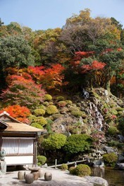 櫻井家住宅・日本庭園の紅葉