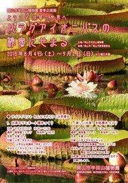 夏季企画展 ようこそ水草の世界へ パラグアイオニバスの秘密にせまる