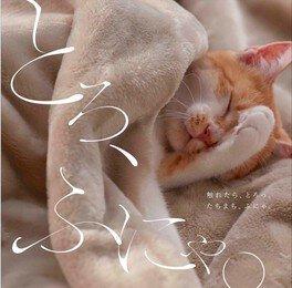 とろふにゃ猫とお昼寝@池袋