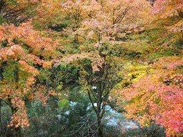 那倉川渓谷の紅葉