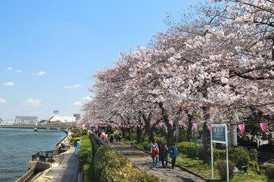 「隅田公園の桜」のお花見(浅草)