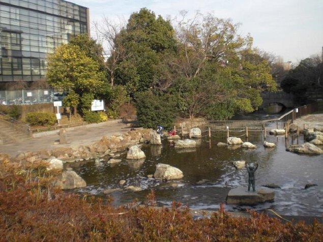 仙台堀川公園・南砂緑道公園の紅葉
