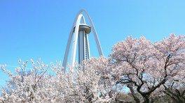 138タワーパークの桜
