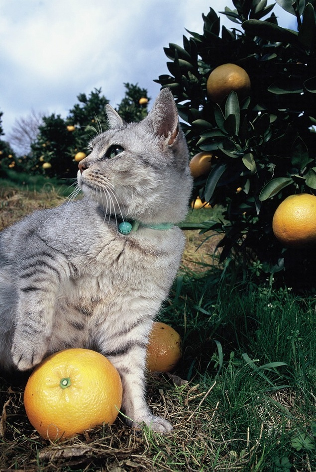【臨時休館】岩合光昭 いよねこ 猫と旅する写真展