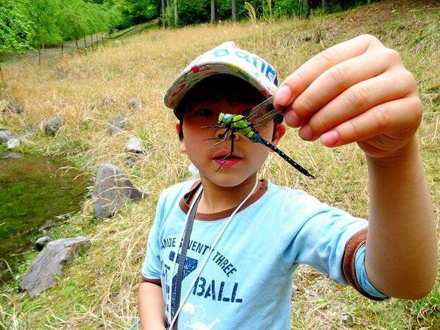 親子野遊び教室 春の昆虫観察入門<中止となりました>