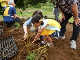 国営昭和記念公園 こもれびの里「ジャガイモ掘り体験」(6月)