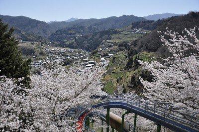 於安パークの桜 - 桜名所 お花見2021   ウォーカープラス