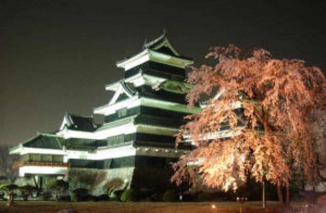 【桜・見ごろ】松本城