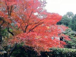 安養寺の紅葉