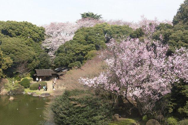 【臨時休館】春の庭園開放