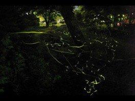 修善寺温泉 ほたるの夕べ