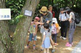 夏休み自由研究 くぬぎの森の生きもの観察