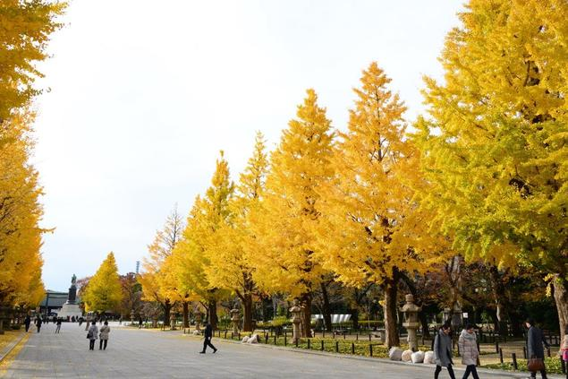 靖国神社の紅葉(東京都) |紅葉名所2020 - ウォーカープラス