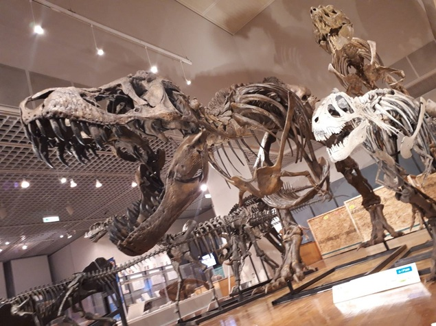 第74回企画展「体験!発見!恐竜研究所―ようこそ未来の研究者―」
