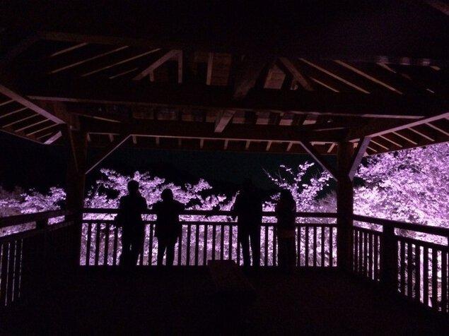 筆影山山頂夜間桜ライトアップ