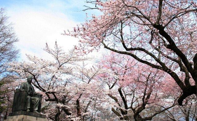 水沢公園桜まつり